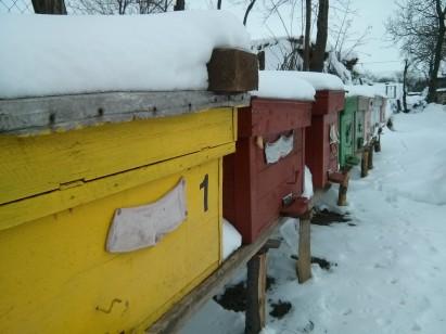 Afacere din apicultura