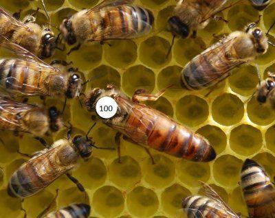 curs online de apicultura