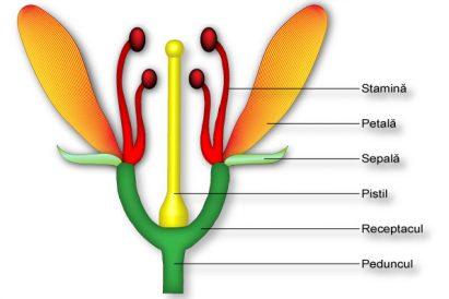 polenizarea plantelor