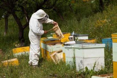 4 Sfaturi Esentiale in Cresterea Albinelor