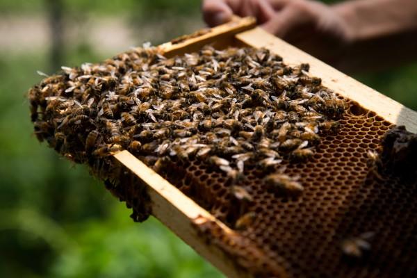 lectii apicultura pentru incepatori