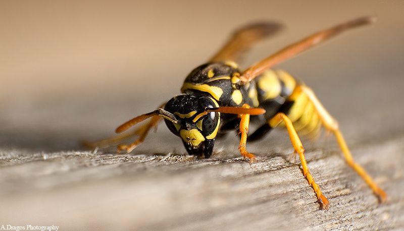 lectii apicultura.ro