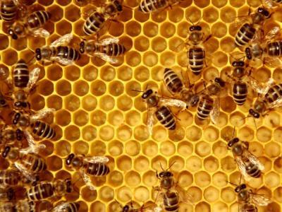 managmentul familiilor de albine