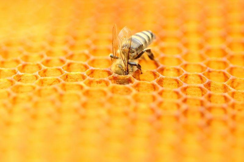 moartea albinelor
