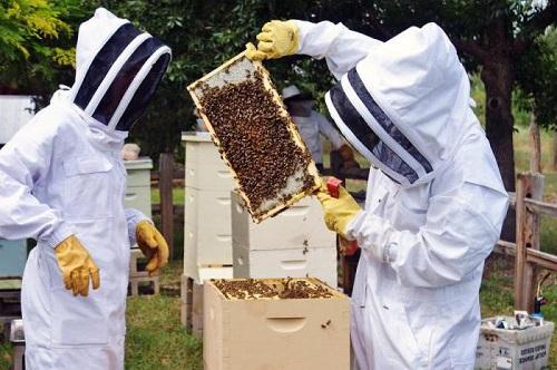 Cele 10 greseli pe care un apicultor incepator le face