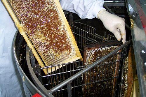 cum extragi mierea