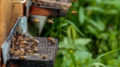 apicultura naturala si fara tratamente